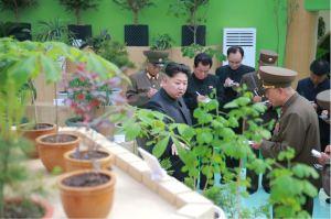 160515 - 조선의 오늘 - KIM JONG UN - Marschall KIM JONG UN besuchte die Baumschule Nr. 122 der KVA - 07 - 경애하는 김정은동지께서 지식경제시대의 요구에 맞게 과학화, 공업화, 집약화가 훌륭히 실현된 조선인민군 122호양묘장을 현지지도하시였다