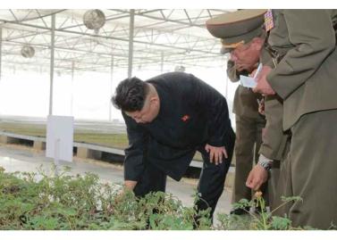 160515 - RS - KIM JONG UN - Marschall KIM JONG UN besuchte die Baumschule Nr. 122 der KVA - 03 - 경애하는 김정은동지께서 지식경제시대의 요구에 맞게 과학화, 공업화, 집약화가 훌륭히 실현된 조선인민군 122호양묘장을 현지지도하시였다