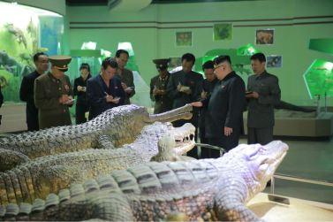 160521 - 조선의 오늘 - KIM JONG UN - Genosse KIM JONG UN besuchte das Naturmuseum und den Zentralen Zoologischen Garten vor deren Einweihungen - 08 - 경애하는 김정은동지께서 완공을 앞둔 자연박물관과 중앙동물원을 현지지도하시였다