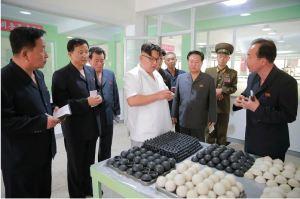 160602 - 조선의 오늘 - KIM JONG UN - Marschall KIM JONG UN sah sich die neu gebaute Pyongyanger Sportgerätefabrik an - 10 - 경애하는 김정은동지께서 새로 건설한 평양체육기자재공장을 현지지도하시였다