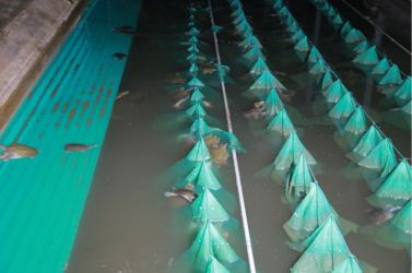 160706 - 조선의 오늘 - KIM JONG UN - Genosse KIM JONG UN besichtigte den rekonstruierten Betrieb für Sumpfschildkrötenzucht Pyongyang - 07 - 경애하는 김정은동지께서 우리 나라 양식공장의 본보기, 표준으로 전변된 평양자라공장을 현지지도하시였다