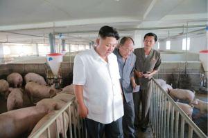 160818 - 조선의 오늘 - KIM JONG UN - Marschall KIM JONG UN besichtigte den Schweinezuchtbetrieb Taedonggang - 03 - 경애하는 김정은동지께서 대동강돼지공장을 현지지도하시였다