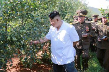 160818 - 조선의 오늘 - KIM JONG UN - Marschall KIM JONG UN besuchte das Obstbaukombinat Taedonggang - 06 - 경애하는 김정은동지께서 대동강과수종합농장을 현지지도하시였다
