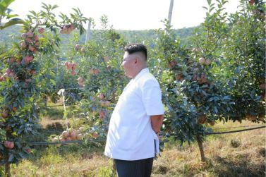 160818 - 조선의 오늘 - KIM JONG UN - Marschall KIM JONG UN besuchte das Obstbaukombinat Taedonggang - 10 - 경애하는 김정은동지께서 대동강과수종합농장을 현지지도하시였다