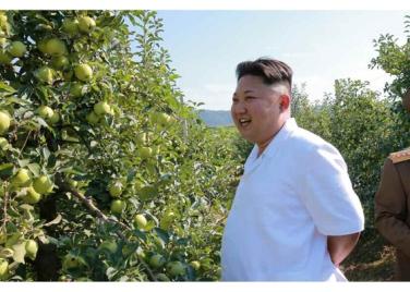 160818 - RS - KIM JONG UN - Marschall KIM JONG UN besuchte das Obstbaukombinat Taedonggang - 05 - 경애하는 김정은동지께서 대동강과수종합농장을 현지지도하시였다