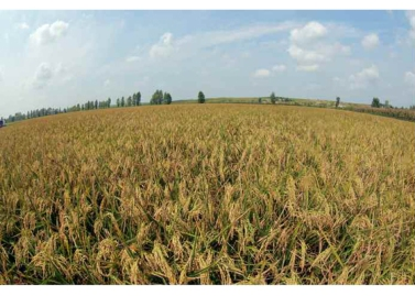 160913-rs-marschall-kim-jong-un-besichtigte-den-landwirtschaftsbetrieb-nr-1116-der-810-truppe-der-kva-06-%ea%b2%bd%ec%95%a0%ed%95%98%eb%8a%94-%ea%b9%80%ec%a0%95%ec%9d%80%eb%8f%99%ec%a7%80