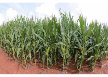 160913-rs-marschall-kim-jong-un-besichtigte-den-landwirtschaftsbetrieb-nr-1116-der-810-truppe-der-kva-09-%ea%b2%bd%ec%95%a0%ed%95%98%eb%8a%94-%ea%b9%80%ec%a0%95%ec%9d%80%eb%8f%99%ec%a7%80